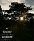 Joyce Kilmer's 'Trees'