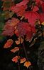Annandale Autumn Fantasy #1 © Miriam A. Kilmer