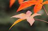 Autumn Splendor, Green and Flame © Miriam A. Kilmer