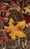 Autumn Tapestry #2 © Miriam A. Kilmer