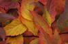 Autumn Swirl © Miriam A. Kilmer