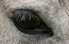 A Horse's Eye © Miriam A. Kilmer