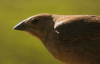 Sparrow Center © Miriam A. Kilmer