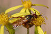 Bee On Wildflower © Miriam A. Kilmer
