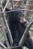 Black Bear Cub #1 © Miriam A. Kilmer