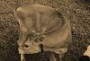 Curved Calf © Miriam A. Kilmer