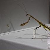 Praying Mantis © Jennifer Schafer