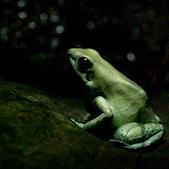 Mint Green Frog © Jennifer Schafer
