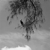 Perching Anhinga © Jennifer Schafer