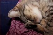 Cozy Nap © Miriam A. Kilmer