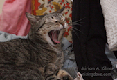 Yawn on Bright Laundry © Miriam A. Kilmer