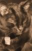 Wide World of Cats © Rafael Angevine