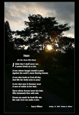 Trees &copy; Miriam A. Kilmer