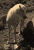 White Horse 2 © Miriam A. Kilmer